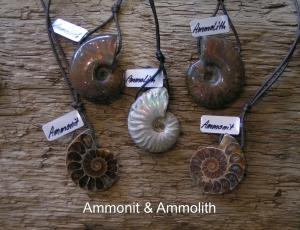 Ammonit-Ammolith